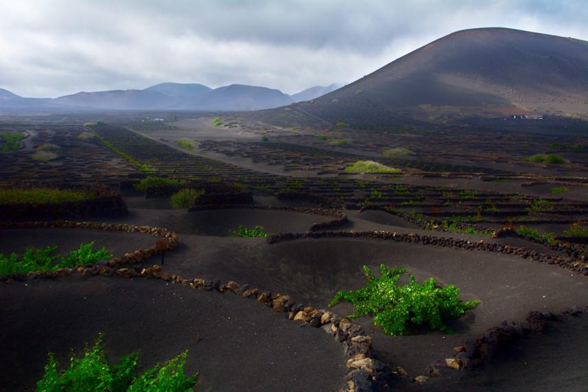 La Geria Vino. Que ver en Geria. Valle de Geria en Lanzarote